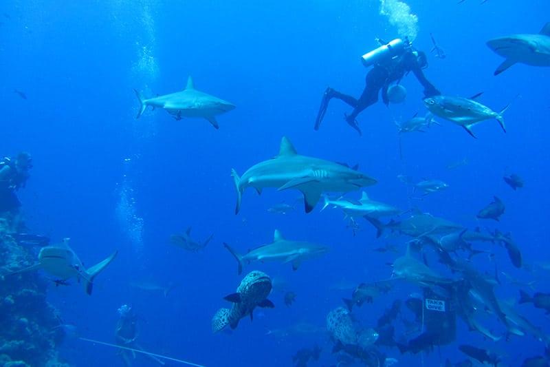 Mergulhar na Grande Barreira de Corais