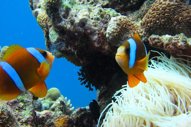 Melhores pontos de mergulho na Austrália