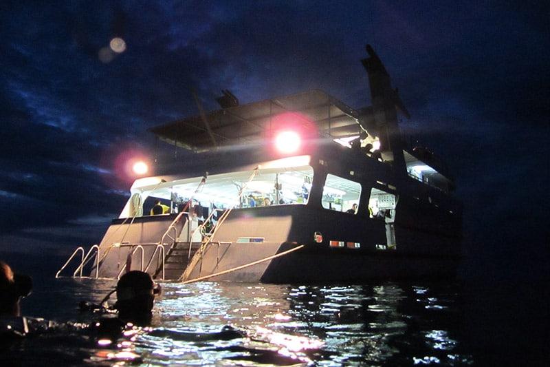 Mergulho noturno em Great Barrier Reef