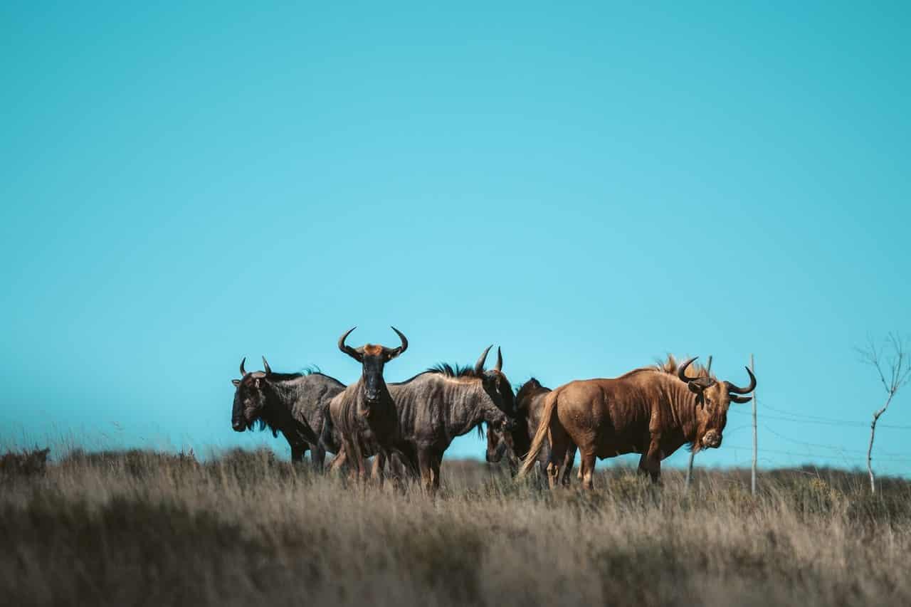 maior parque da áfrica