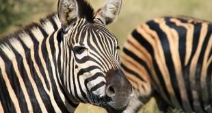 Kruger x Serengeti, qual é melhor para um safari na África?