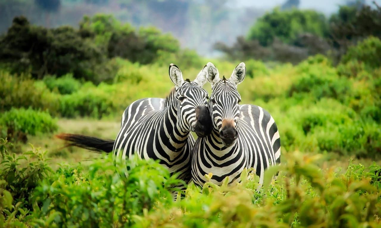 lugares para visitar na áfrica do sul