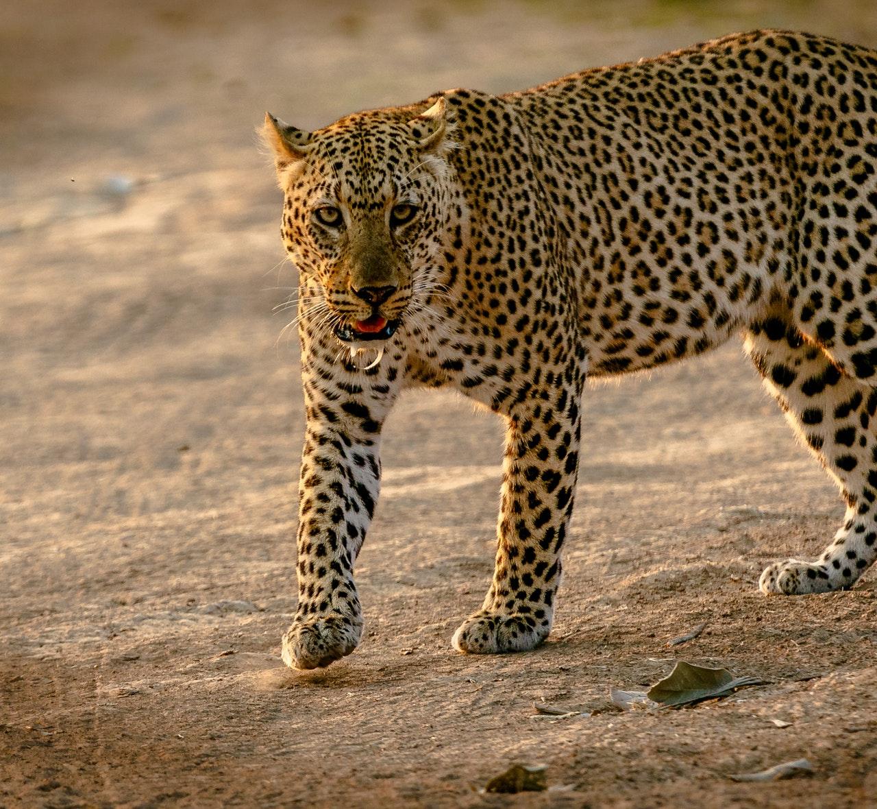 como fazer um safari na africa