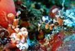 melhores-pontos-mergulho-tailandia-similan-islands