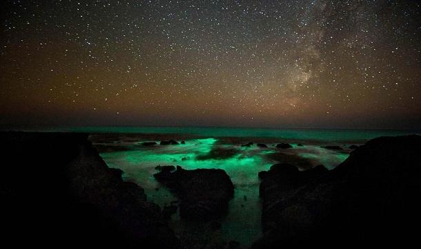 Plankton luminoso.