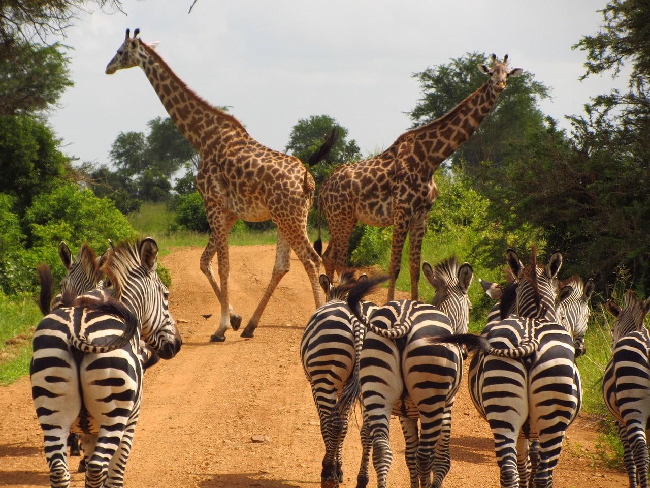 pontos de interesse tanzânia