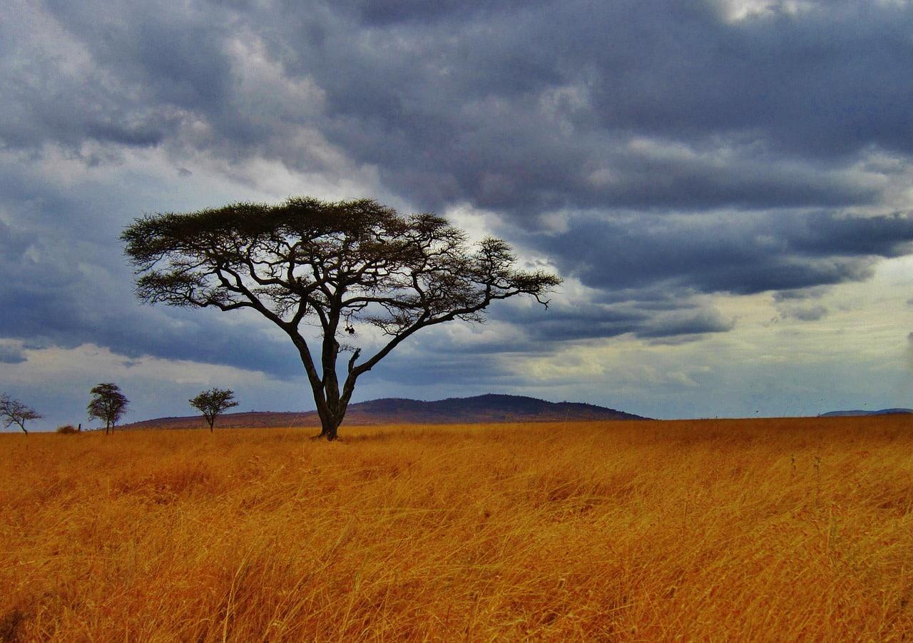 tours guiados na tanzânia