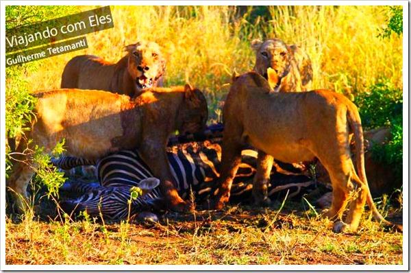 melhores-safari-do-mundo-africa