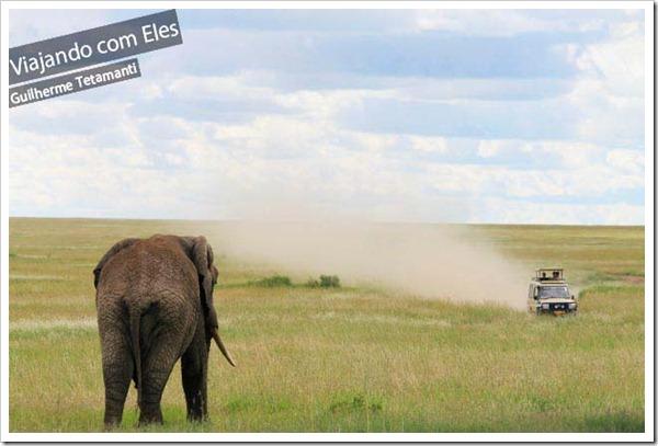 safari-serengeti-tanzania