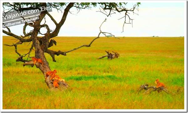 safaris-na-africa