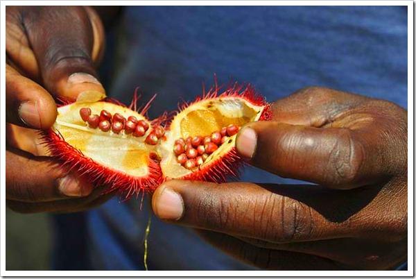 Dicas sobre Zanzibar