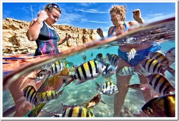 Mergulhar em Sharm el-Sheikh.