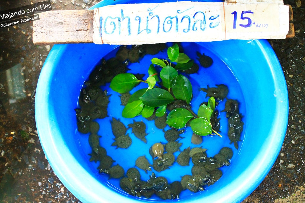 Tartaruguinhas à venda