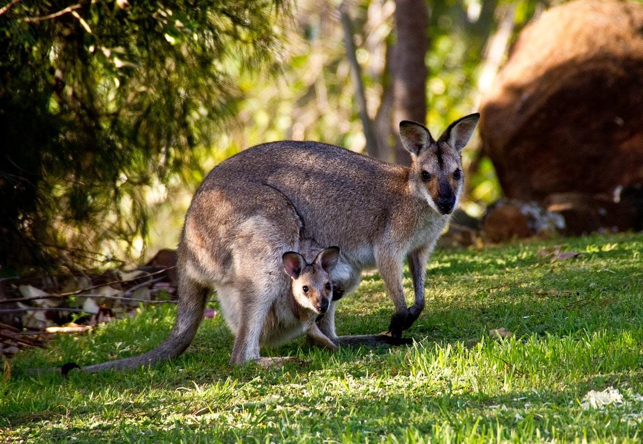excursões austrália