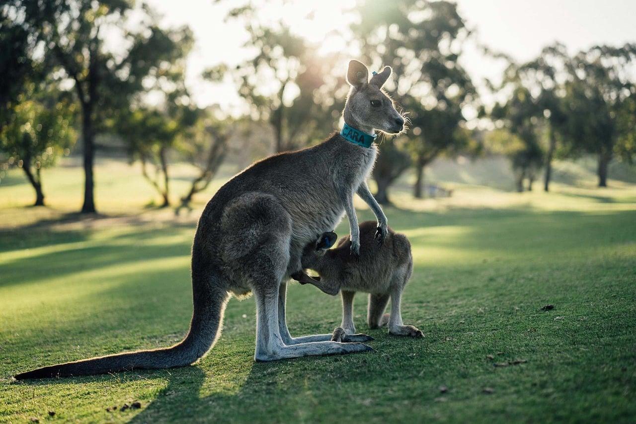 tudo sobre turismo na austrália