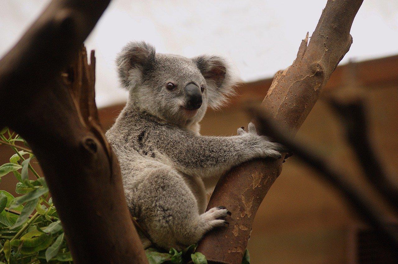 dicas para visitar a austrália
