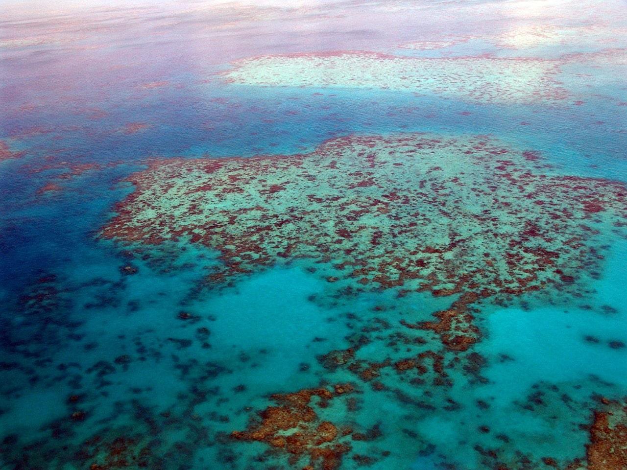 austrália mergulho