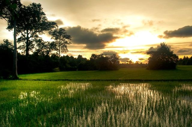 Cambodja - Perder-se nos arrozais!
