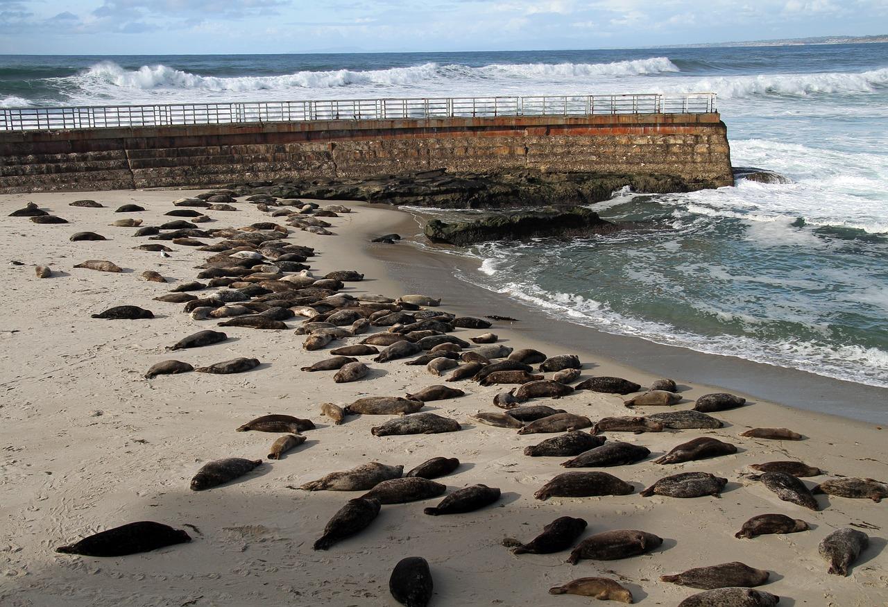 la jolla praia california