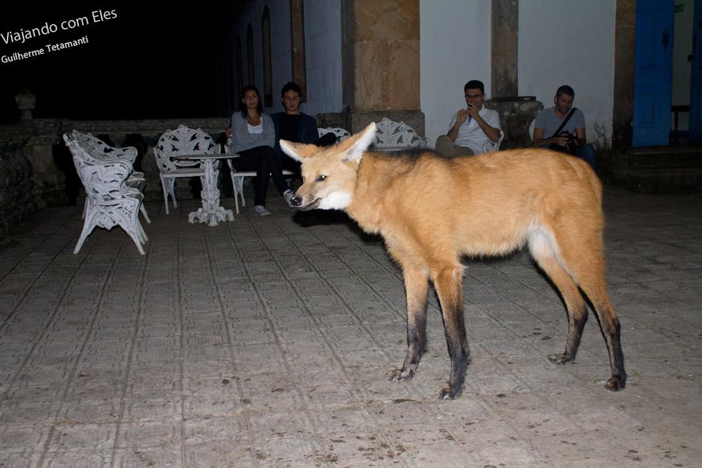 Lobo-guará no Santuário do Caraça