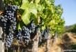 Os melhores vinhos do Chile
