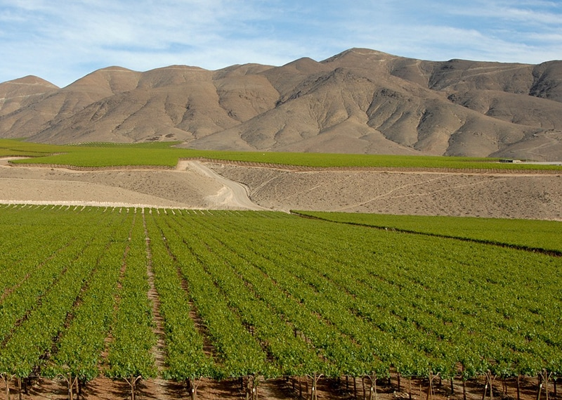 Roteiro pelas melhores vinícolas de Santiago