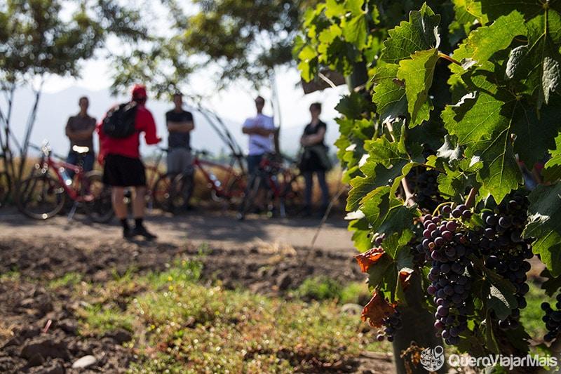 Bike tour na Viña Santa Rita