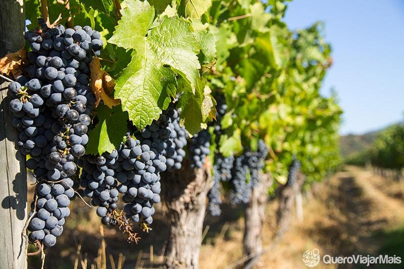 Tour em vinícolas de Santiago