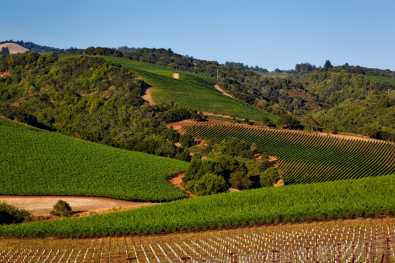 sonoma county vinho california