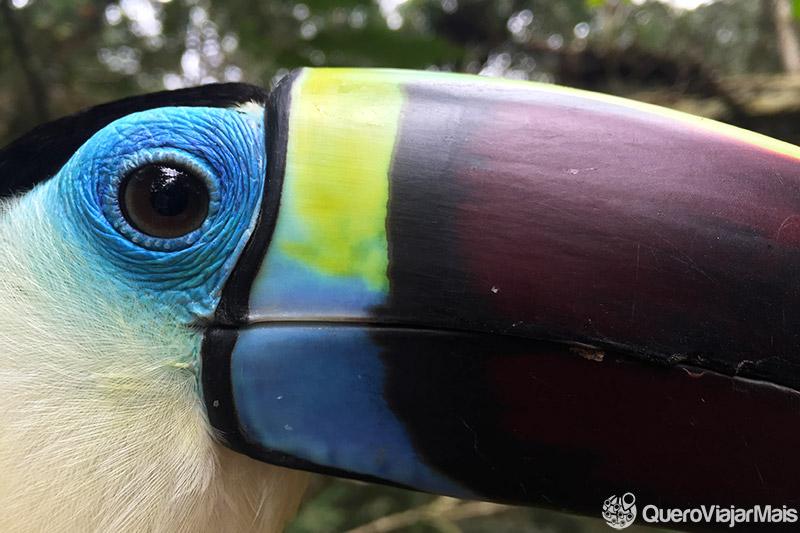 Dicas do Parque das Aves em Foz do Iguaçu