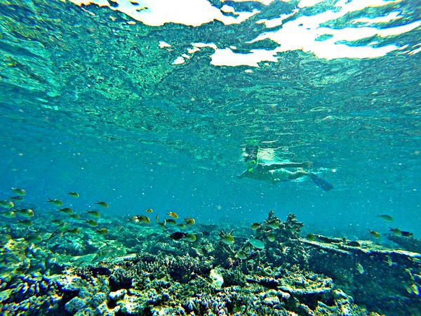 Snorkeling nas Maldivas