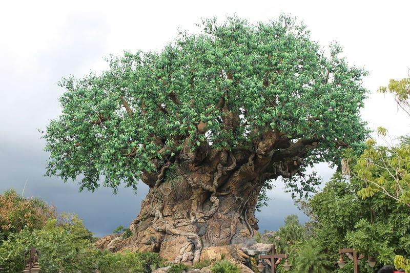Roteiro nos parques da Disney excelente
