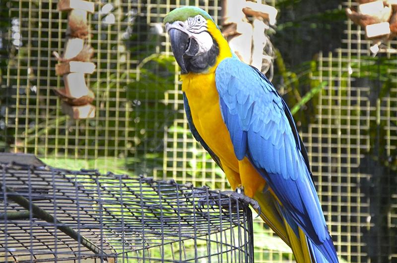 Aves mais bonitas do mundo