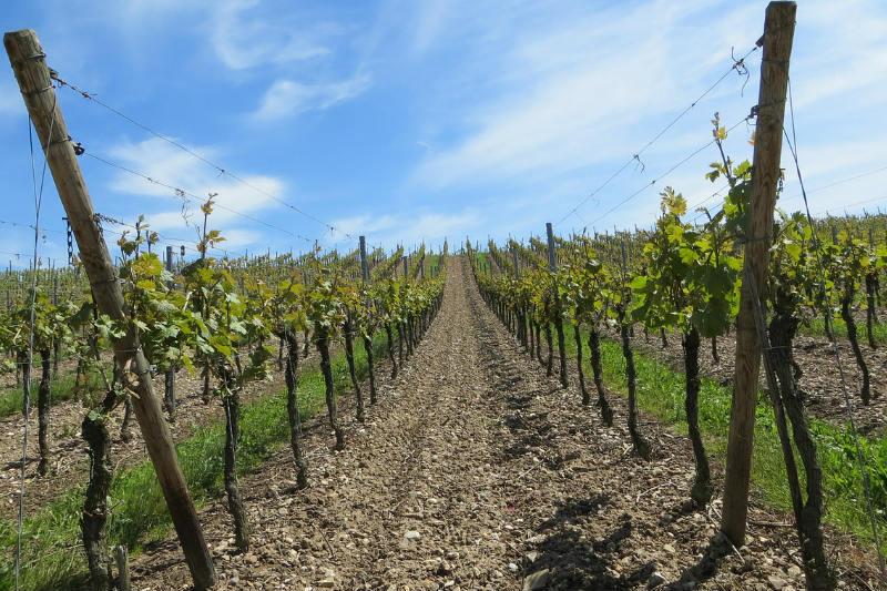 Melhor época para conhecer vinícolas no Chile