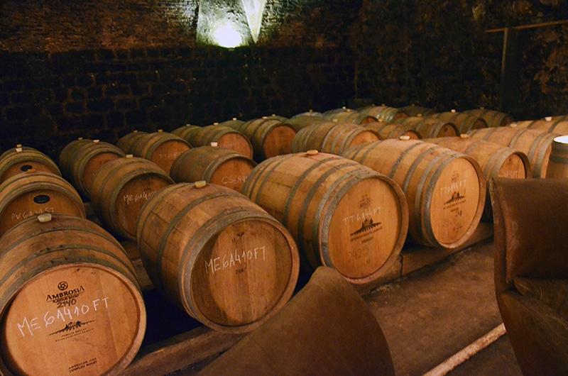 Dicas de vinícolas em Montevidéu