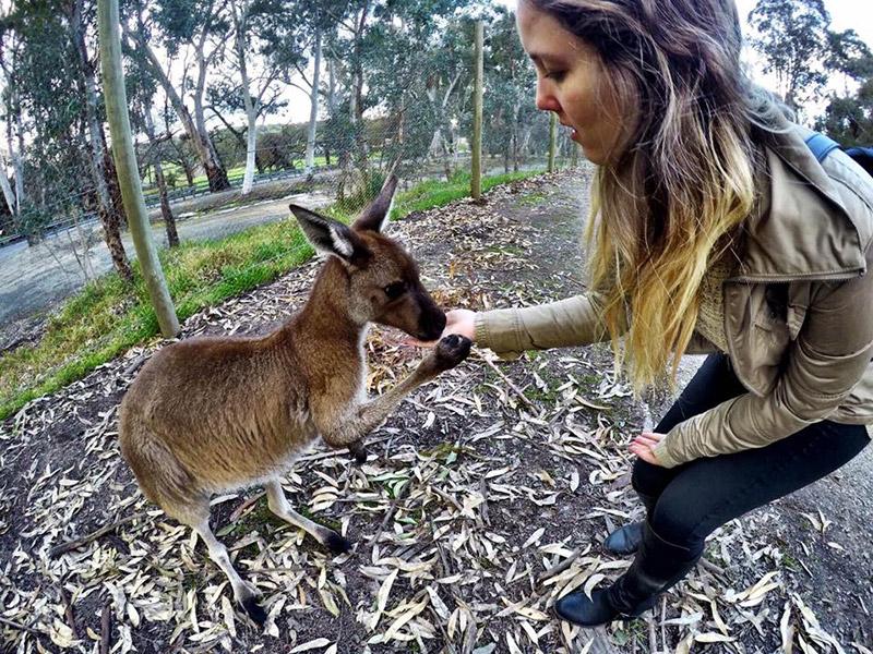 Dicas para estudar na Austrália