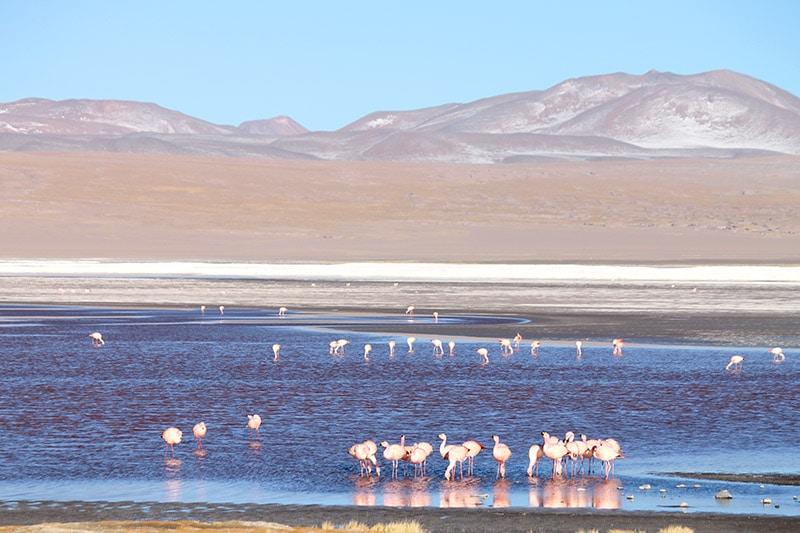 Laguna Colorada no Salar de Uyuni