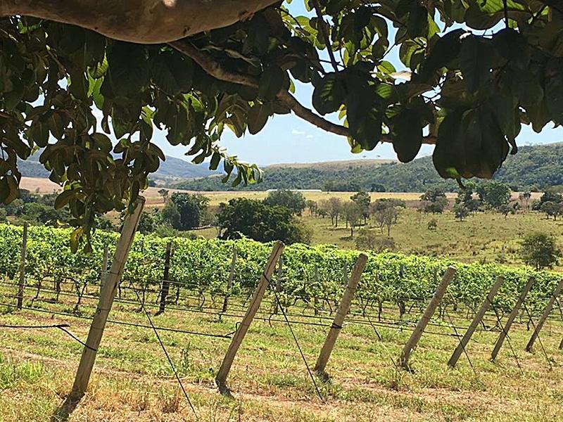 Como visitar a vinícola em Cocalzinho de Goiás