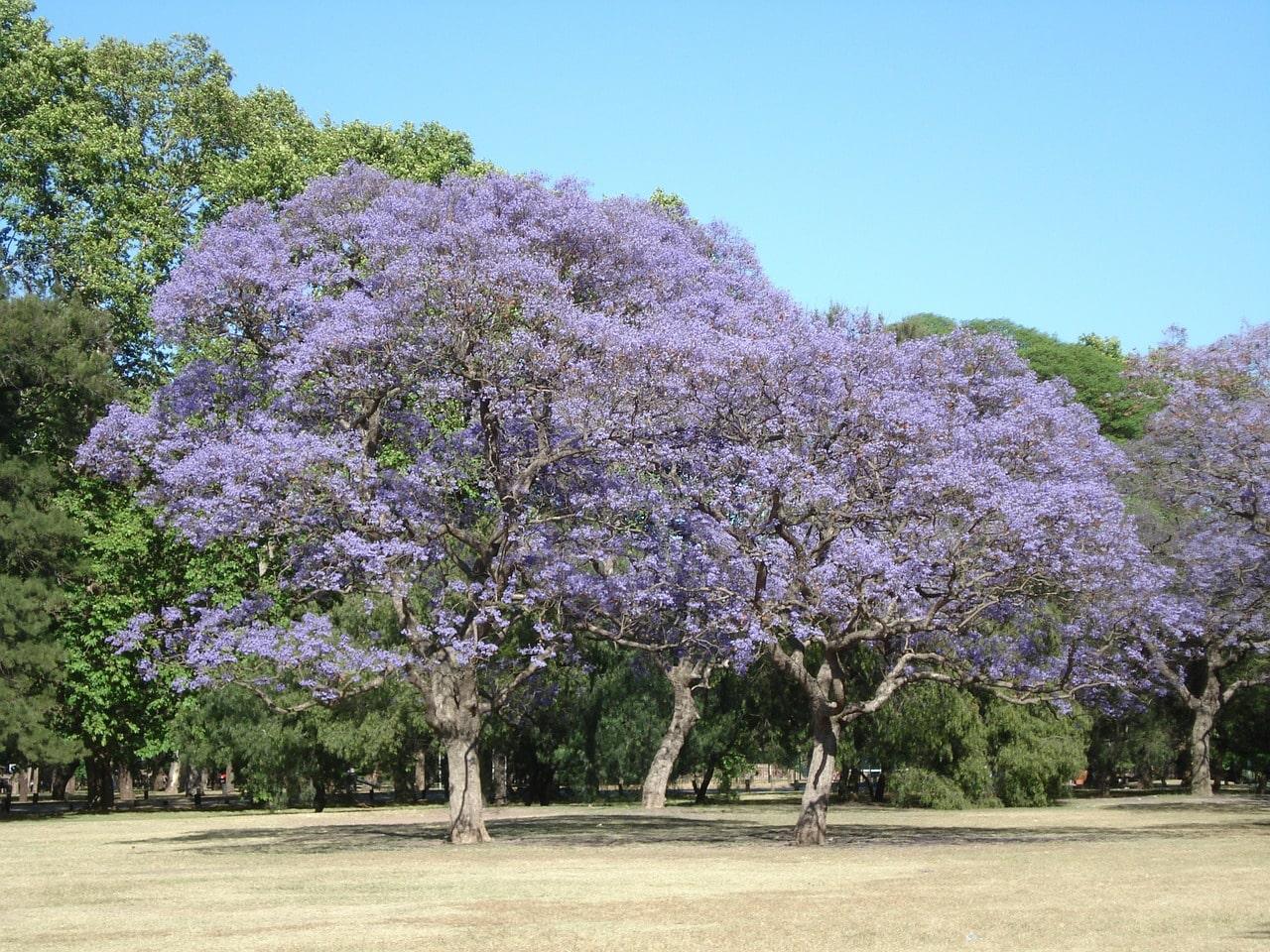 Quando é primavera em Buenos Aires?