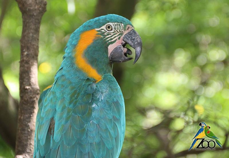 Visitar zoológico em Santa Cruz de la Sierra