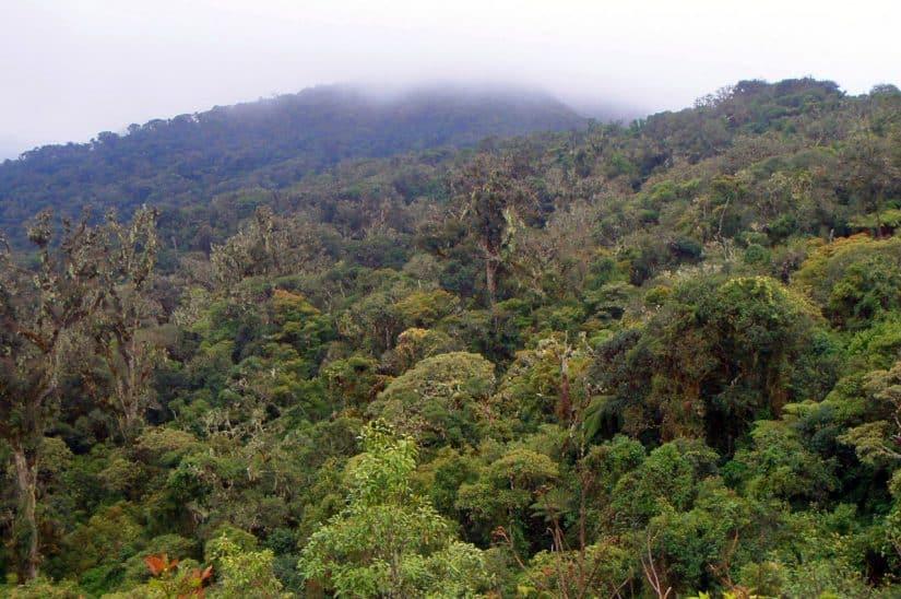 floresta bolívia