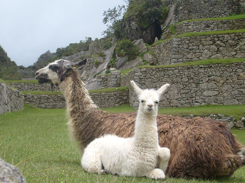 O que ver em Machu Picchu, no Peru