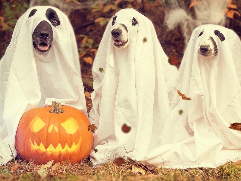 Halloween no Canadá