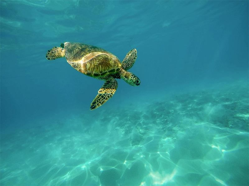 Nadar com as tartarugas em Curaçao