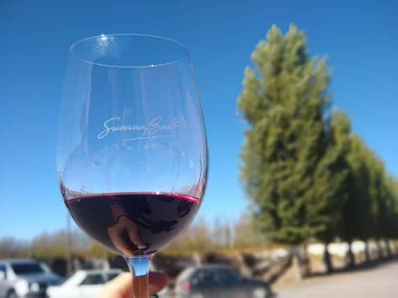Onde comprar vinhos argentinos