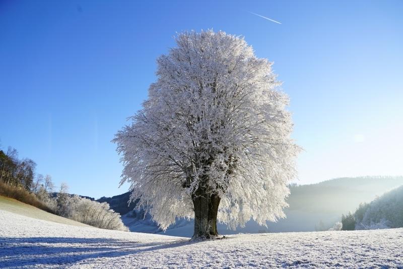Curiosidades sobre o inverno no Canadá