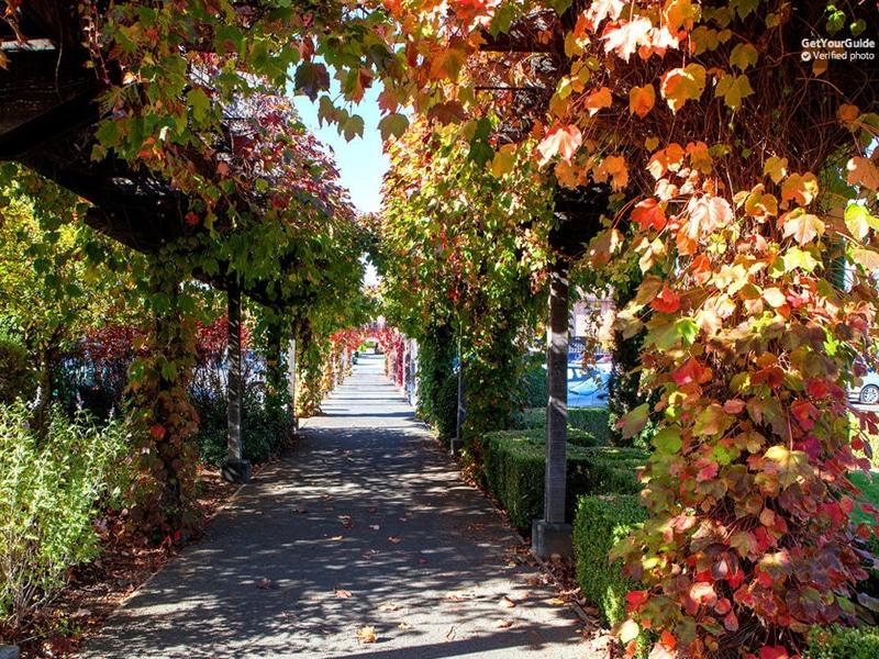 Vale do Sonoma e Napa com degustação de vinhos