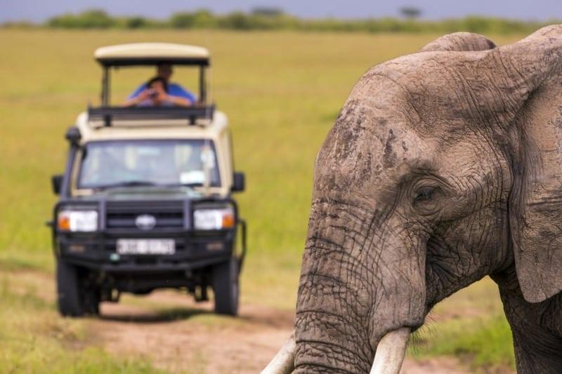 Safari de um dia em Cape Town
