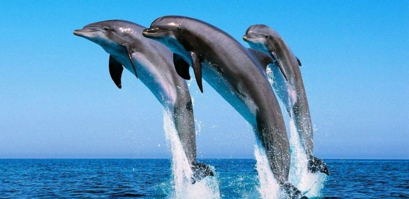Mergulho com golfinhos no Egito