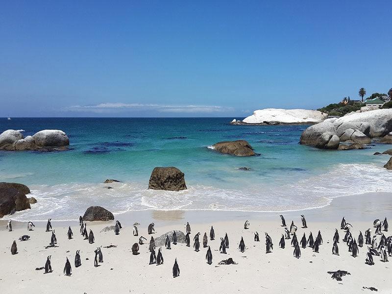 Roteiro de 10 dias em Cape Town